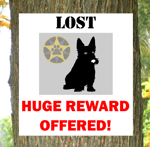 Large reward lost pet