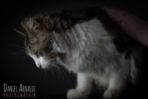 How Do I Remove Mats From A Long Haired Cat Blog Lost