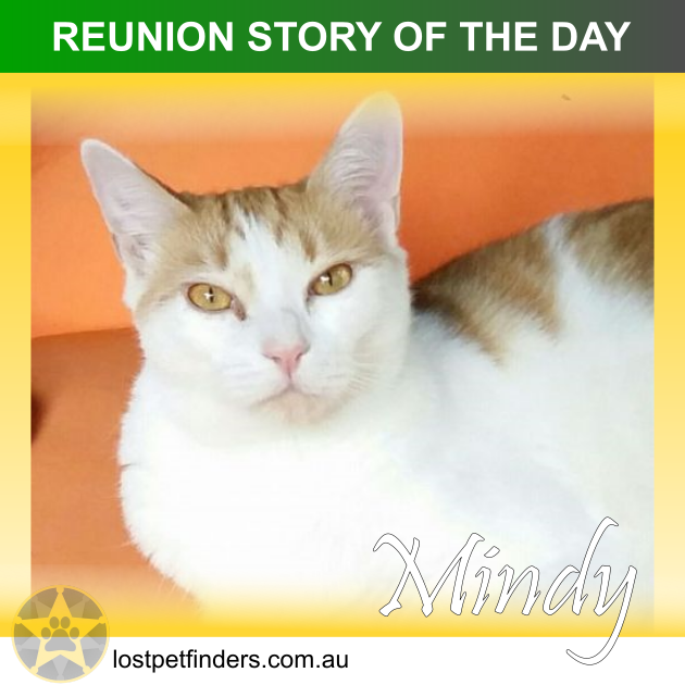 Lost cat found and reunited in Port Stephens Hunter NSW