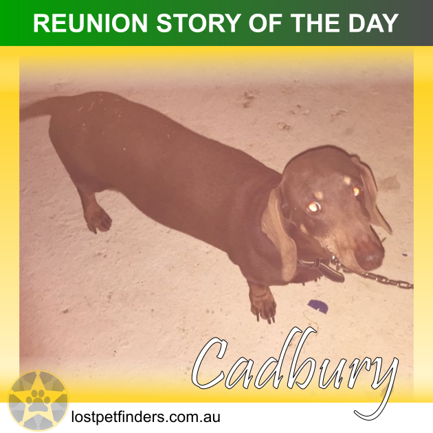 missing dog found Caboolture QLD Australia