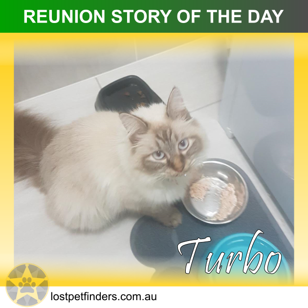 lost cat found reunited brisbane qld australia