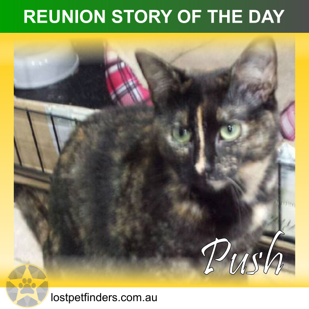 REUNION STORY OF THE DAY: Push the lost cat from VIC Australia