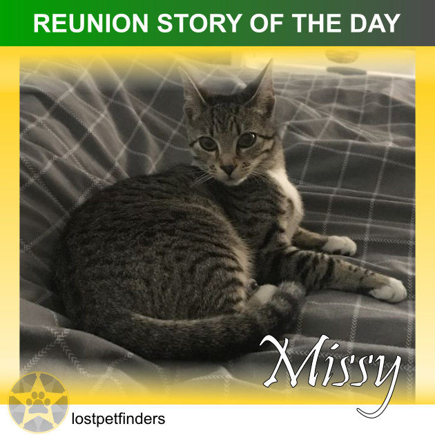 REUNION STORY OF THE DAY: Missy the found cat from Melbourne VIC