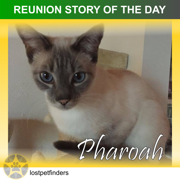 REUNION STORY OF THE DAY: Pharoah the lost cat from Moreton Bay QLD