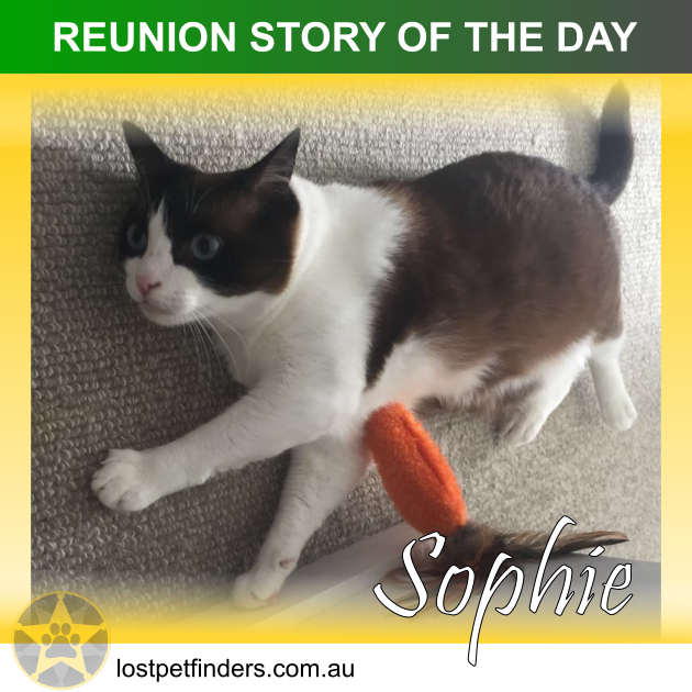 REUNION STORY OF THE DAY: Sophie the lost cat from Brisbane QLD