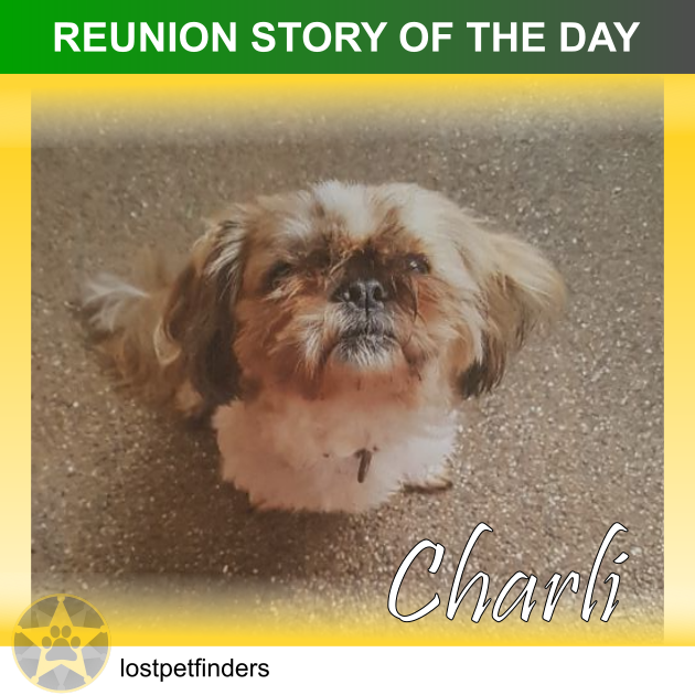 Shih Tzu dog lost found reunited Brisbane QLD