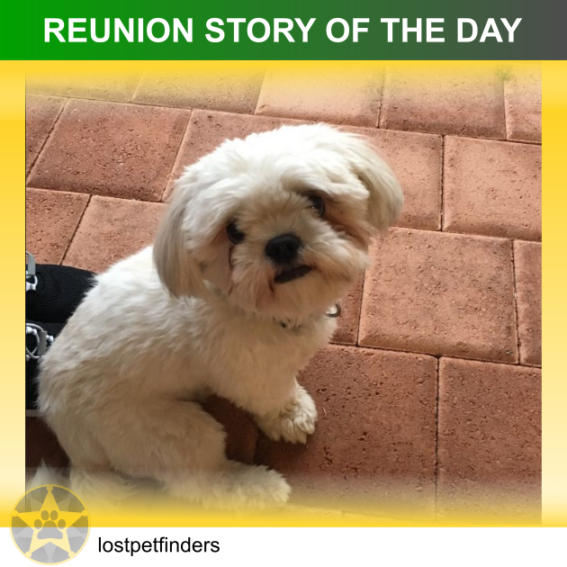 Shih Tzu dog lost found reunited Perth WA Australia