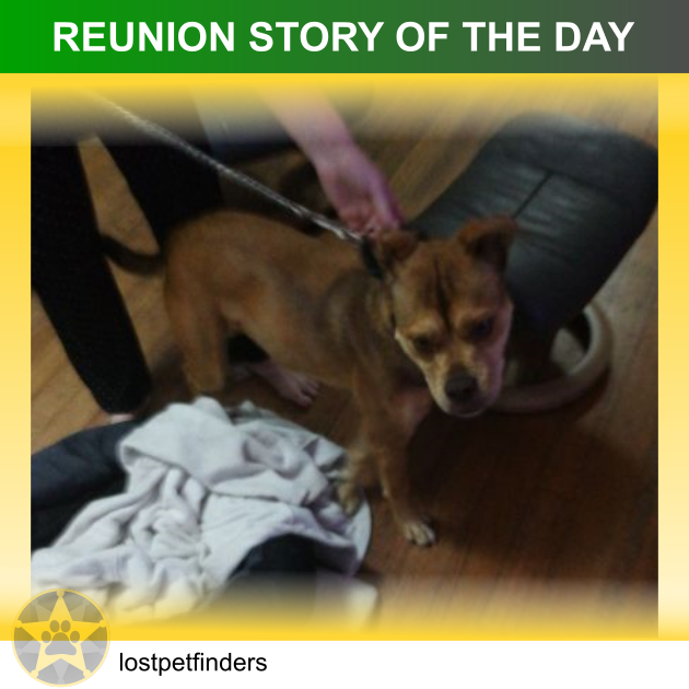 pit bull staffy dog lost found reunited Melbourne VIC Australia
